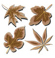 dry leaves vector image vector image