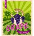 Grape retro poster vector image