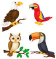 Bird cartoon collection vector image