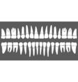 set of human teeth dental template vector image
