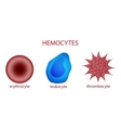 blood corpuscles erythrocyte leukocyte platelet vector image
