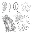 different leaves contour plot vector image