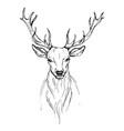 sketch by pen head noble deer front view vector image