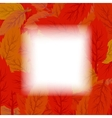 Set of Red and Orange Leaves vector image