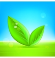Green leaves 10 eps vector image
