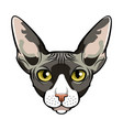 sphynx cat face cartoon vector image