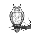 Owl is sitting on the branch vector image