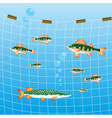 fishing network and fish river vector image