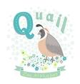 Letter Q - Quail vector image