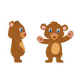 cute bear cartoon character front and sides view vector image