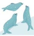 Fur Seal Wildlife Set vector image