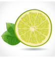 Fresh juicy piece of lime isolated on white vector image vector image