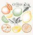 vintage citrus fruits collection vector image