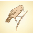 Sketch rufous hornero bird in vintage style vector image