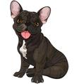 Cute bulldog vector image vector image