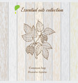 pure essential oil collection hop wooden texture vector image