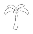 Tree palm with coconut vector image
