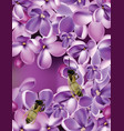 lilac flowers realistic with vector image
