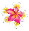 Plumeria flowers vector image