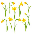 narcissus set vector image vector image
