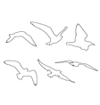 paths of Seagull set on the white background vector image