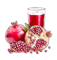 Pomegranate Watercolor imitation vector image vector image