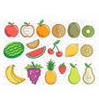 fruit graphics vector image