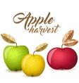 Three apples vector image