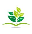 Logo leaves mashed drugs organic product icon vector image