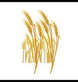 ripe yellow wheat ears vector image