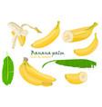 set tropical palm banana leaves and single peeled vector image