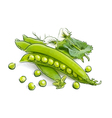 Pea pods vector image vector image