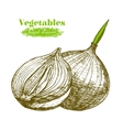Whole Bulb Onion and Slice Hand Draw Sketch vector image