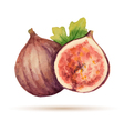Figs vector image