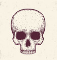 human skull hand drawn vector image