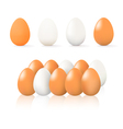Brown and white egg vector