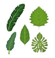 white background with set of green leaves vector image