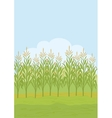 Field with maize vector image