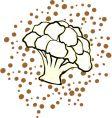 cauliflower vector image
