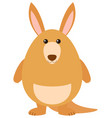 happy kangaroo on white background vector image