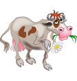Flower Cow vector image vector image