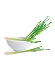 Lemon grass vector image