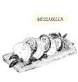 Mozzarella vector image