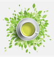 green tea cup green leaves vector image