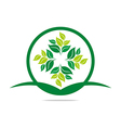 leaves mashed drugs organic product icon vector image