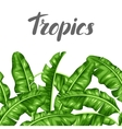 Seamless border with banana leaves Image of vector image