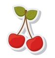 cherry fruit fresh isolated icon vector image