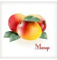 Ripe mango on the white vector image
