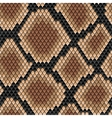 Brown snake seamless pattern vector image