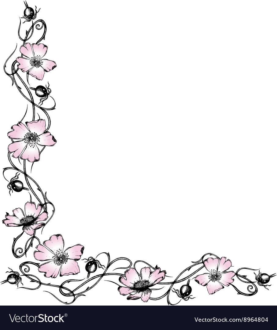 Wild rose blossoms vector